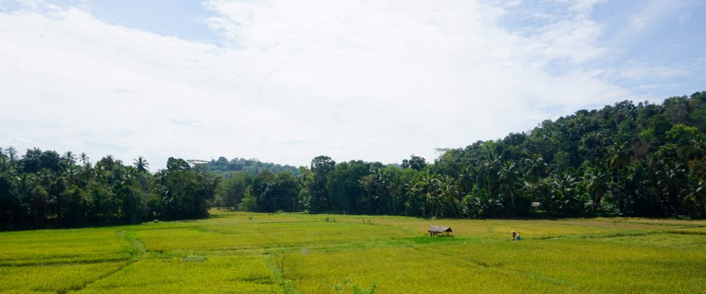 Tropical lowland areas near Colombo.
