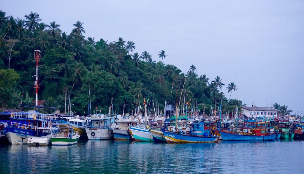 Colorful boats in Mirissa's port as we head out for whale watching.