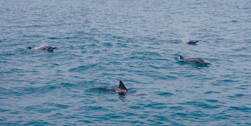 We didn't see any whales that day, but we did see some dolphins.